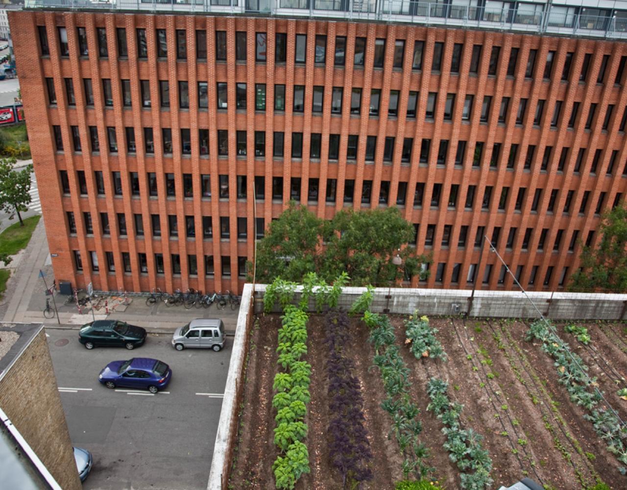 østergro tagfarm Foto: Bent Larsen
