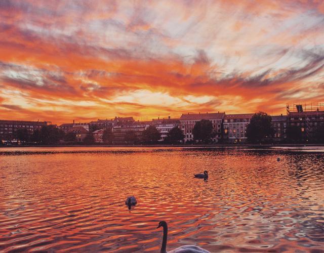 solnedgang svaner peblinge sø