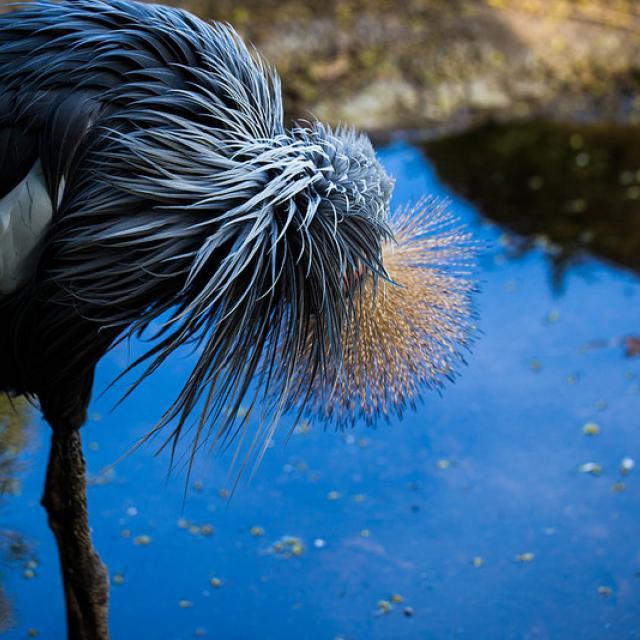 Grooming bird