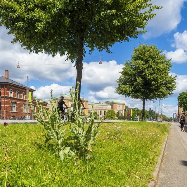 Thistle in the Heart of Copenhagen 2020