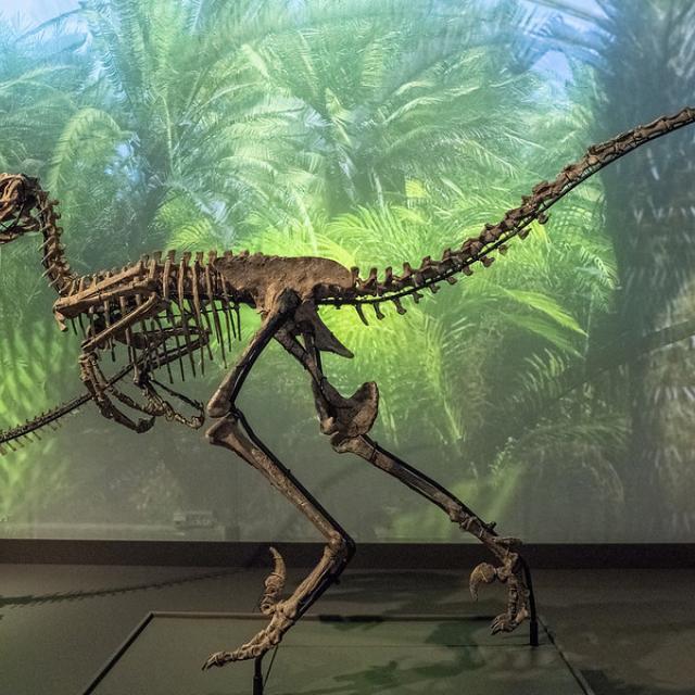 Dinosaur, Natural History Museum of Copenhagen 2020