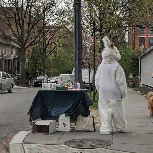 Easter Bunny Confrontation