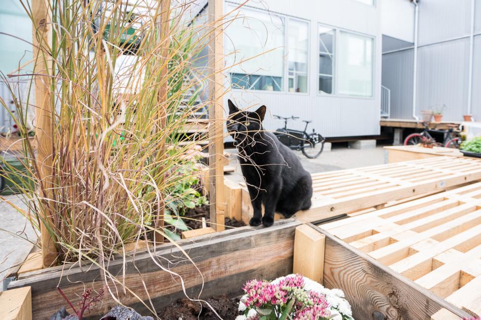 katten billy cph village