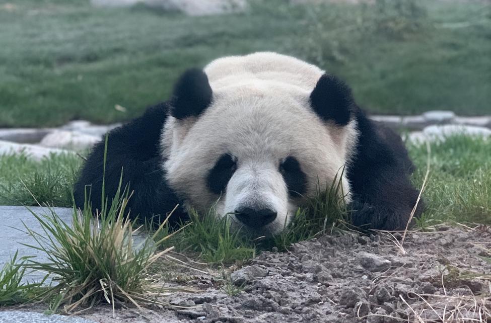 panda fra restaurant panpan