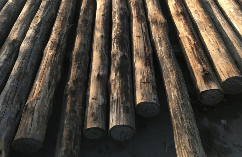 bio4 eukalyptus