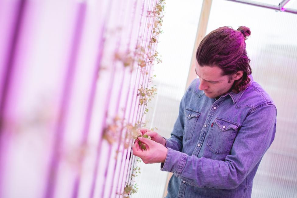 impact farm copenhagen zipgrow