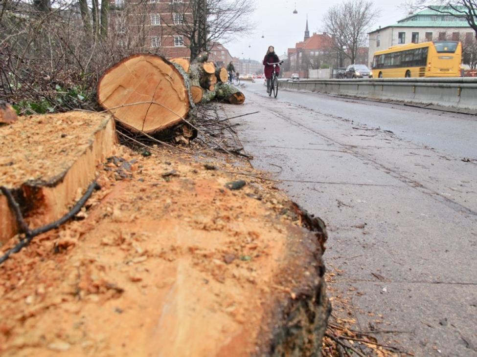 fældet træ københavn