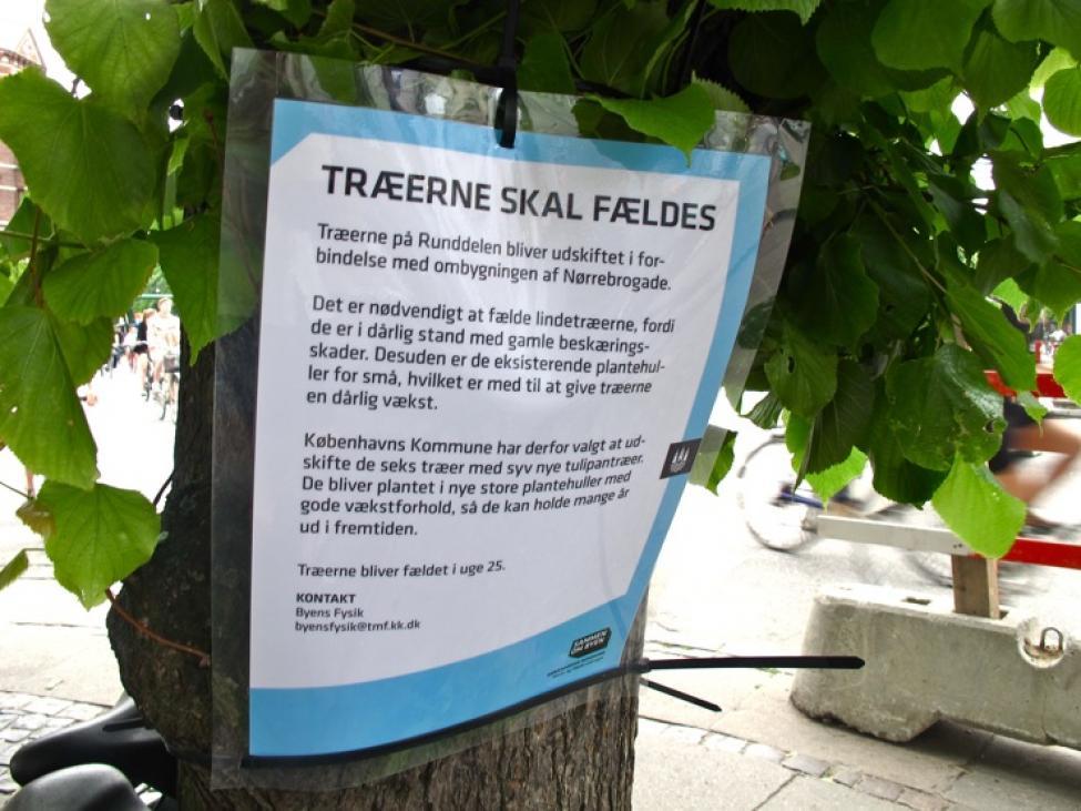 træerne skal fældes nørrebros runddel
