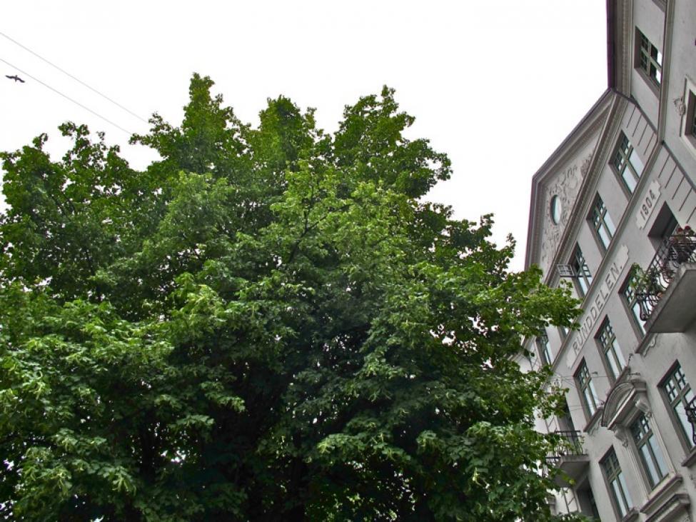 nørrebros runddel stort træ