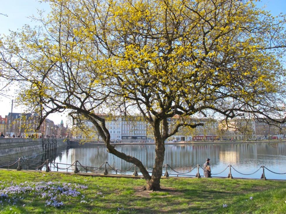træ dronning louises bro